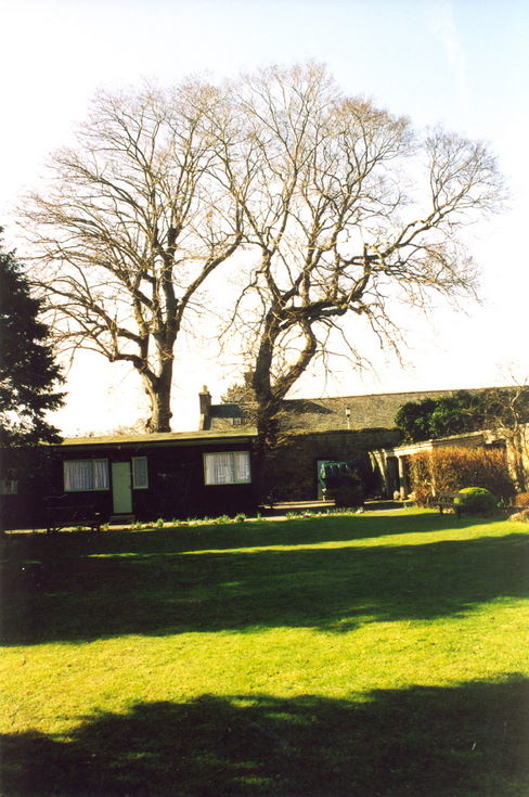 Oldest tree in Dornoch prior to removal 2003