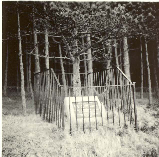 photograph  of memorial tree planted by Argyll & Sutherland Highlanders