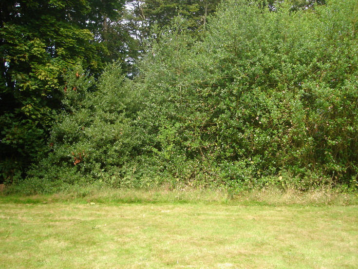 Burghfield House Hotel hedge boundary to lawn
