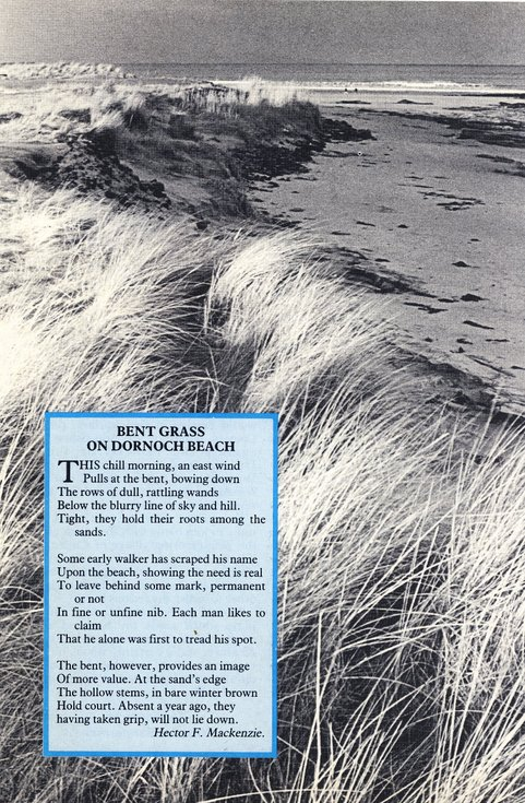 Poem - Bent Grass on Dornoch Beach