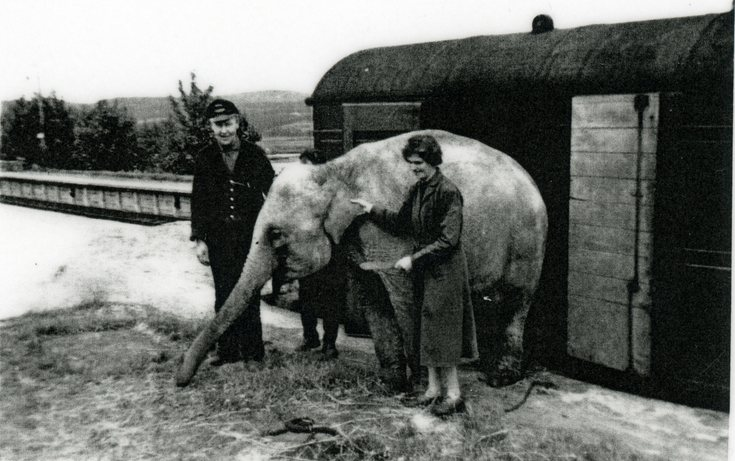 Circus elephants off-loaded from Dornoch Railway