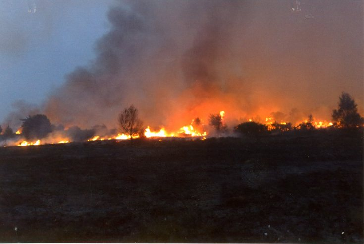 Wild fire at Tain