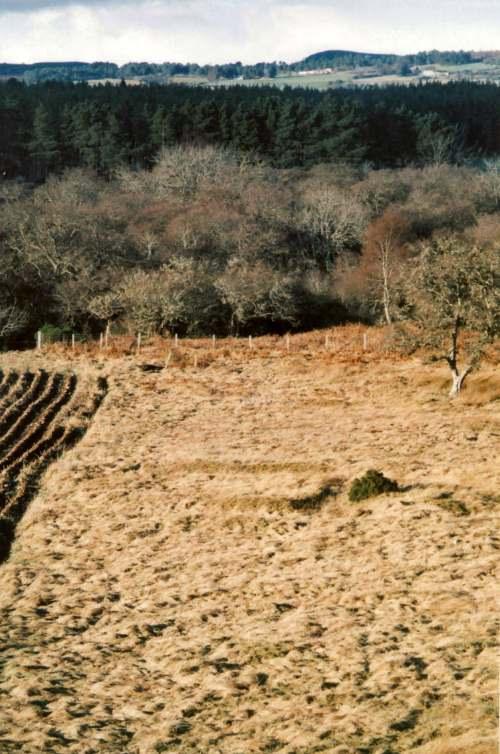 Cyderhall Viking grave