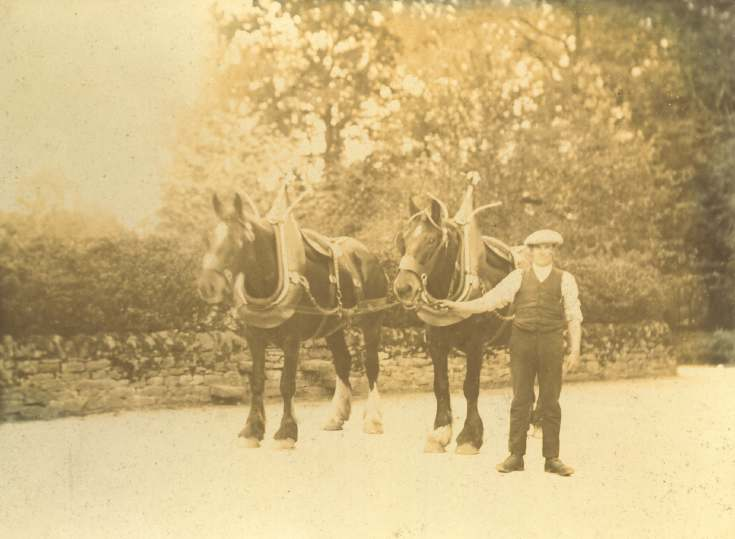 Sepia photograph of work horses in harness