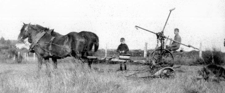 Photograph of farm horses pulling mower.