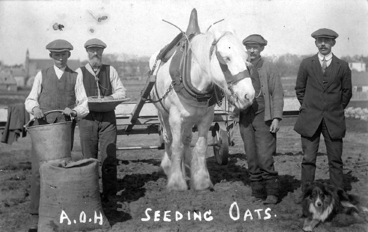 Four men seeding oats