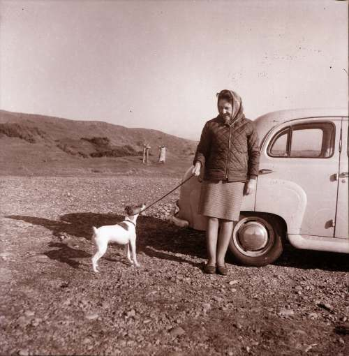 Woman, dog and car