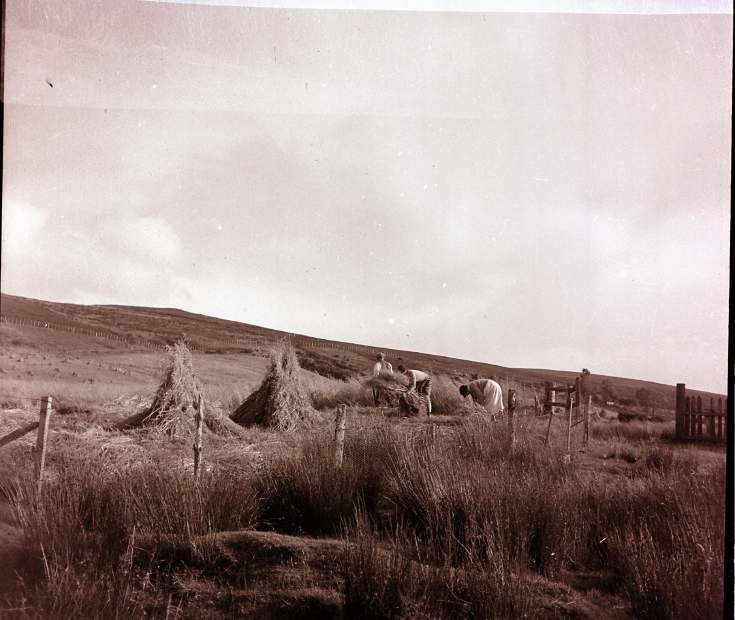Haymaking ~ Collection of negatives belonging to Miss K. L. Lyon