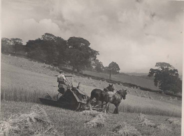 The Photography of Kathleen Lyon - hay making Tyne Valley
