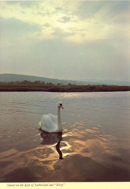 Furness Postcard Collection -   Swan on Kyle of Sutherland