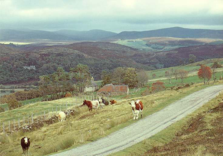 Furness Postcard Collection -  Rogart