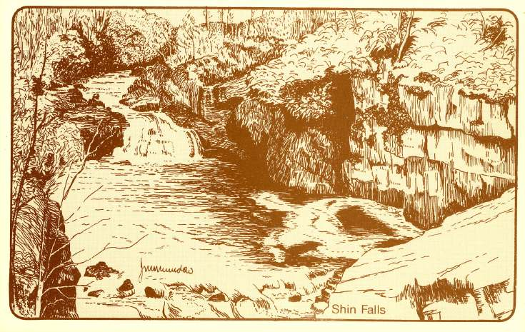 Furness Postcard Collection -  Drawing of the Shin Falls
