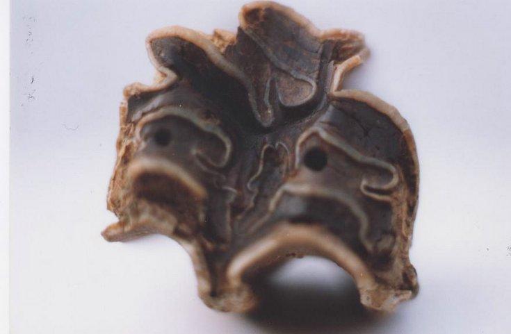 Horse bone