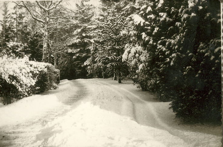 Driveway, in snow