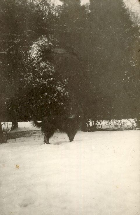 Snow Scene with dog