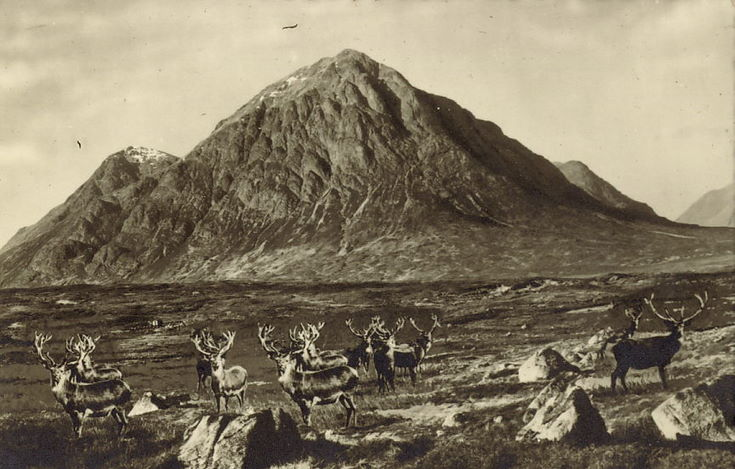 Highland View ~ Gathering of Stags