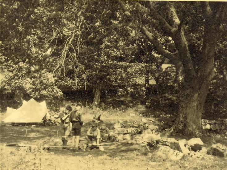 Scouts camping in woodland