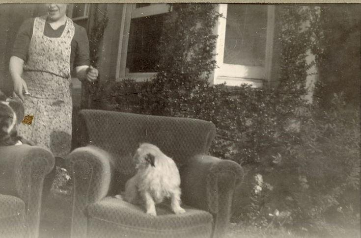 Unidentified Woman, in an apron, with a dog and cat sitting on two armchairs