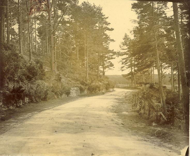 Road from Bonar Bridge approaching Spinningdale
