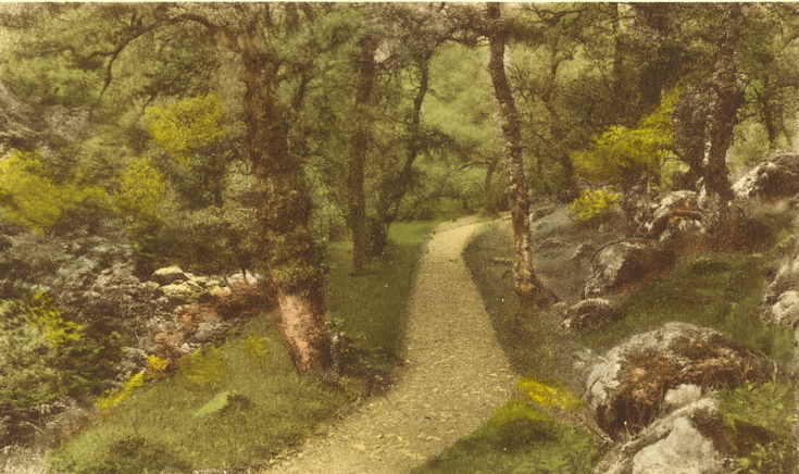 Footpath through woodland at Fairy Glen, Spinningdale