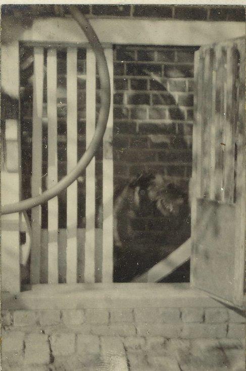 Dog behind barred enclosure (3)