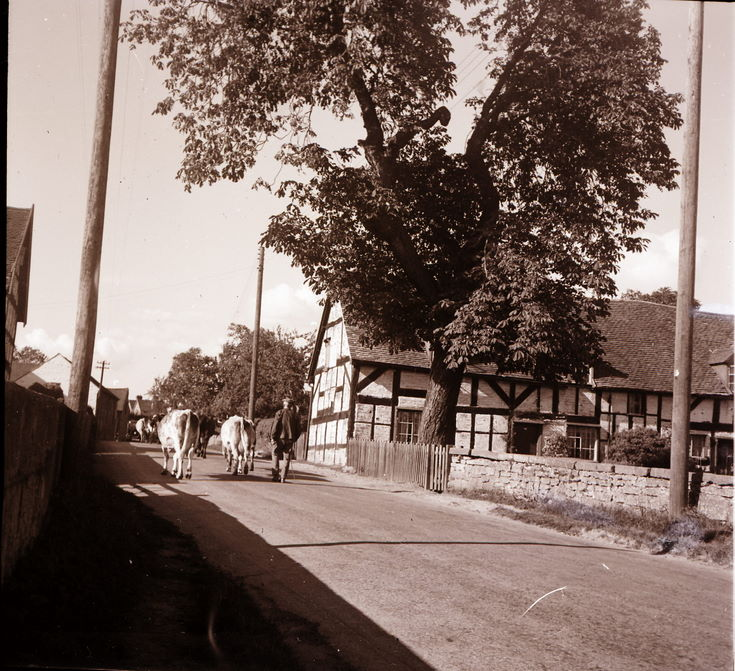 Preston Brockhurst ~ Collection of negatives belonging to Miss K. L. Lyon