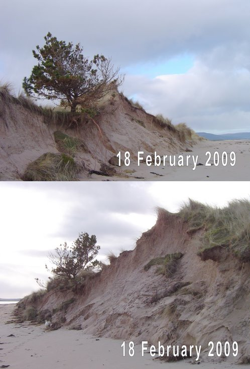 Dornoch links dune erosion 18 Feb 2009